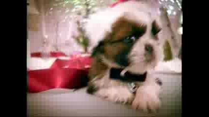 Jingle Pet Song