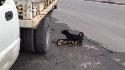 Куче се опитва да съживи мъртвото си приятелче !