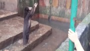 Шокиращи видео на мечки в зоопарк в Индонезия, които молят за храна
