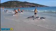 Добри хора спасяват объркали се делфини, които са заседнали на плажа. - Be a Hero !