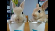 Малки зайци близнаци