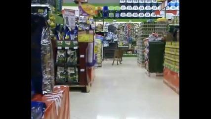 Dog - shopping