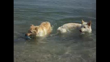 Кучета Пляскат На Брега На Морето