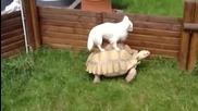 Животни се возят гратис върху костенурки - Компилация