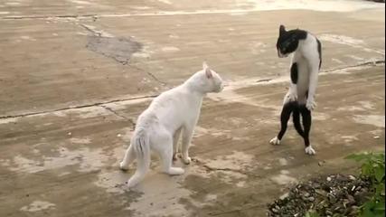 Котка в позата на кобра