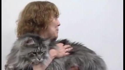 най дългата котка на света