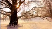 Milieu - Mother Tree