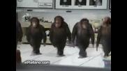 Маймунско хоро