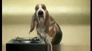 Basset Hound Beat Box