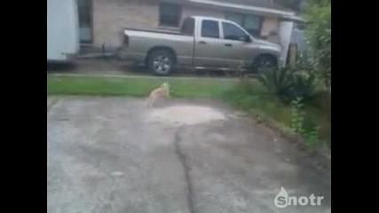 Котка или извънземно?