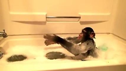 Мамуна се забавлява в банята
