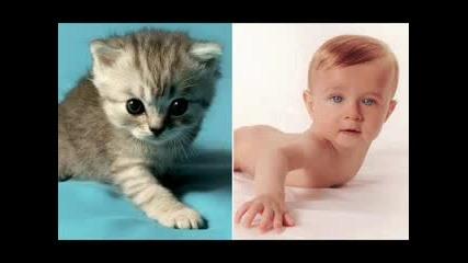 Приликата Между Бебета И Котета
