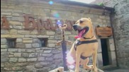 Tret 2- Parkour Dog From Ukraine Hd