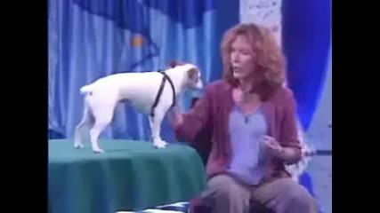Удивително Куче