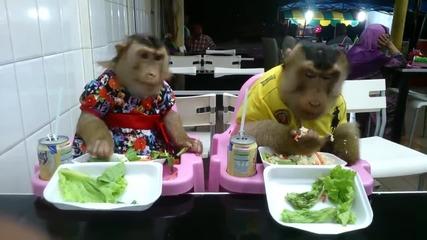 С кеф да ги гледаш как се хранят !