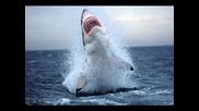 Мегалодон - Най Голямата Акула На Света