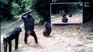 Животни се виждат в огледалото за пръв път