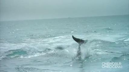 Делфин целува куче