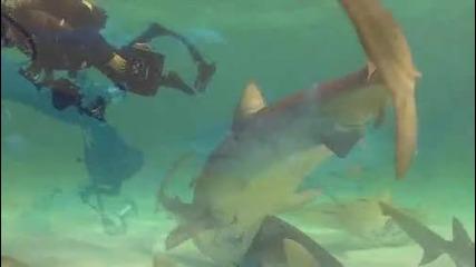 Плажът на Тигровите Акули