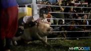 Родео със свинe - Смях