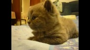 Ето това се нарича уморена котка!