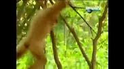 Маймуна дразни малко тигърче!