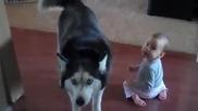 Хъски пее с бебе