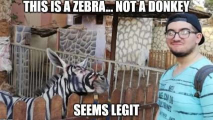 Зоо парк БОЯДИСА магаре, стана... зебра