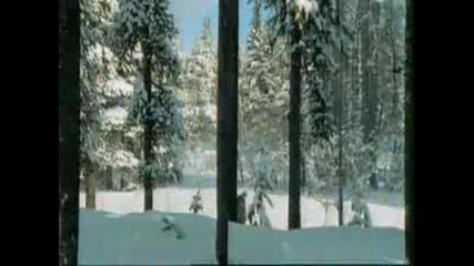Siberian Tigers - David Attenborough