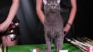 Франция с убедителна победа над Перу според котето-оракул ВладИмир