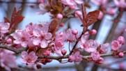 Пролетта е живот Пролетта е надежда