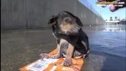 Това е тъжната история на кученцето Джордан !