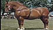 Тежковози(коне) - 3 Част