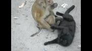 Маймунка Пощи Котка