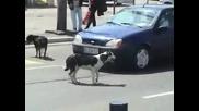 Никога не бибиткай на куче!!
