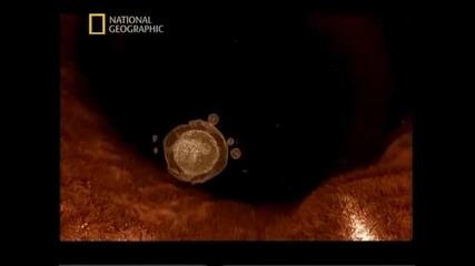 В утробата : животните - National Geographic + Bg subs част1/4