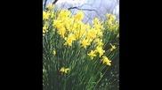 Il Divo - Come Primavera & Нарциси