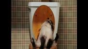 Котка В Тоалетната
