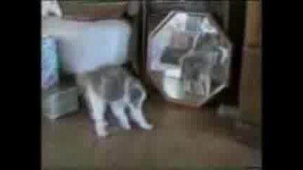 Ах тези котки