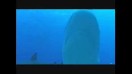 Акули vs. Делфини