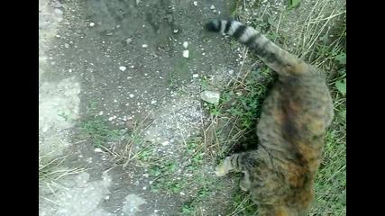 Забава с котка по пътя