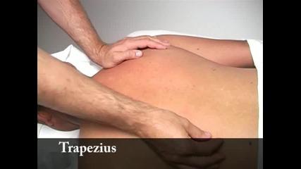 Клиничен масаж 2 от 10