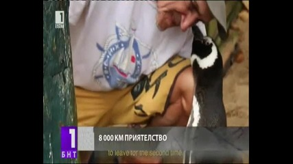 Пингвин пътува 8000 км, за да се срещне с Приятел.