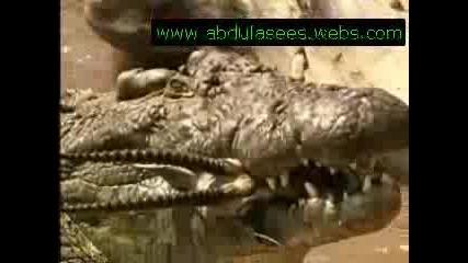Жертви на алигатори