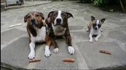 Малко куче - голям апетит