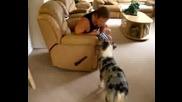 Куче за милион долара