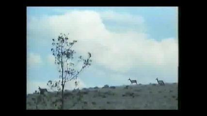 Grayeagle [ сивия орел ] (1977) part2