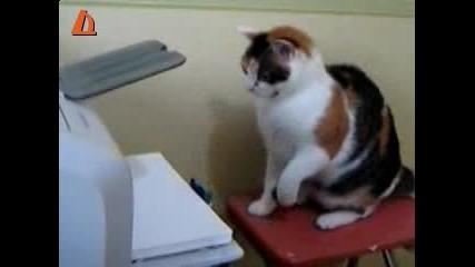 Котка vs. принтер