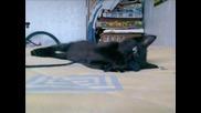 Моето Котенце