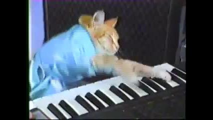 Коте свири на Йоника